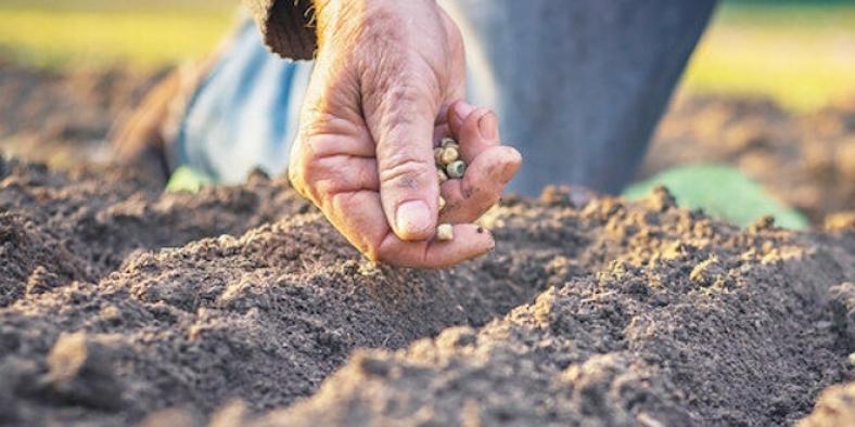 Yerli ve milli tohum geliştiriliyor