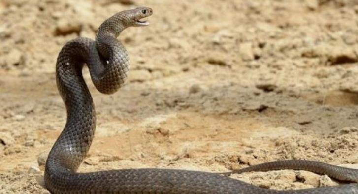 Yılanlar deprem habercisi mi?