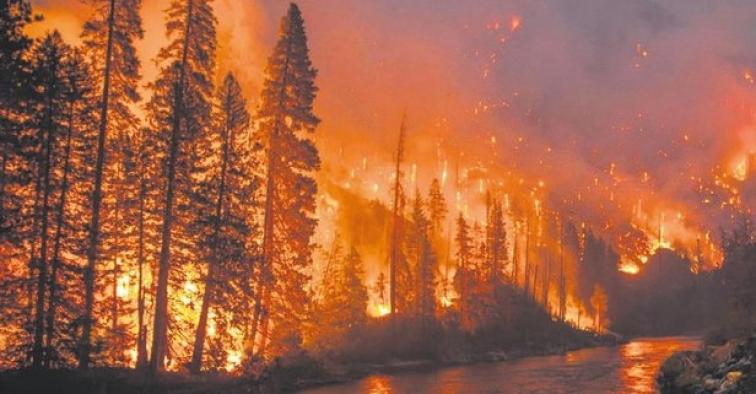 Amazon ormanlarındaki yangın söndürülmezse dünya yoklukla karşı karşıya!