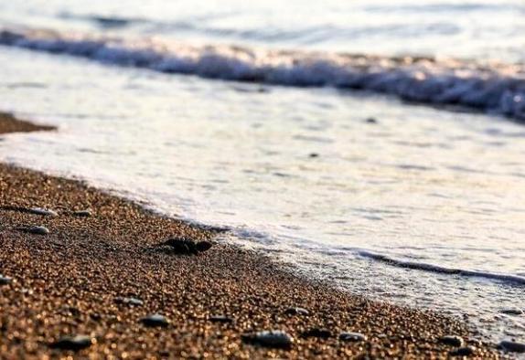 Başkan Böcek'in koruma altına aldığı Caretta Caretta yavruları denizle buluştu