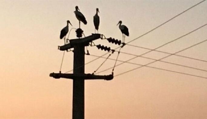 Leylekler için enerji hatlarında izolasyon önlemi
