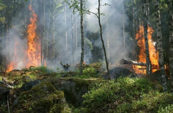 Ormanları mangalcılar yakıyor!