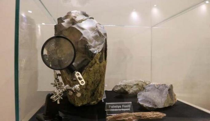 Türkiye'nin hangi şehrinde 19 milyon yıllık fosil ormanı bulundu?