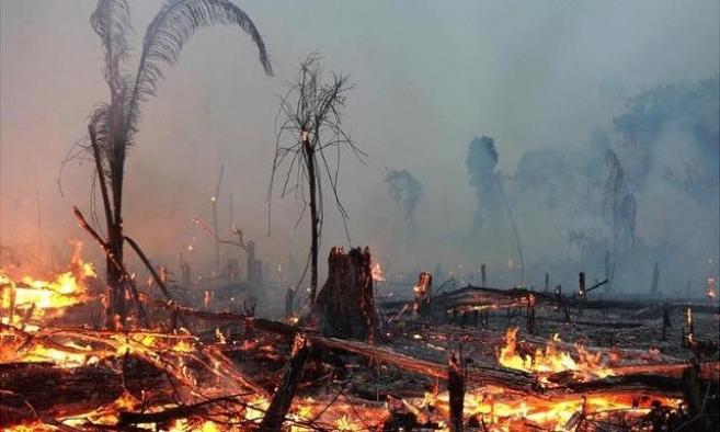 2020'nin ilk 8 ayında 2 bin 114 orman yangını yaşandı