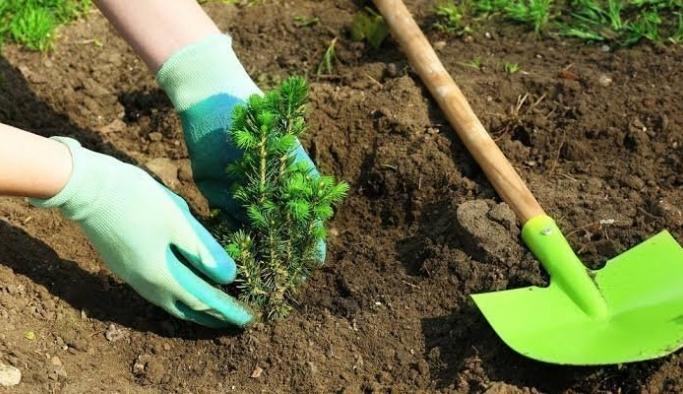 """""""24 Saatte 1 Milyon Ağaç"""" projesi başladı!"""