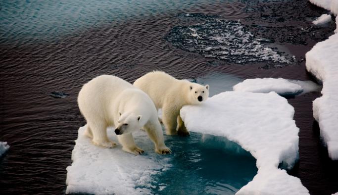 Arktik deniz buzu tarihinin en düşük ikinci seviyesinde!