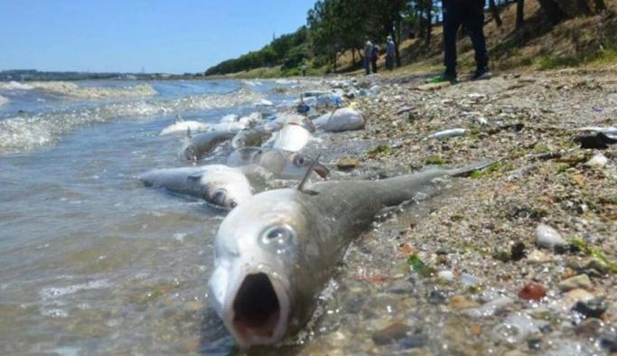 Barajlar kuruyor; balıkların ölmemesi için tankerlerle su taşınıyor