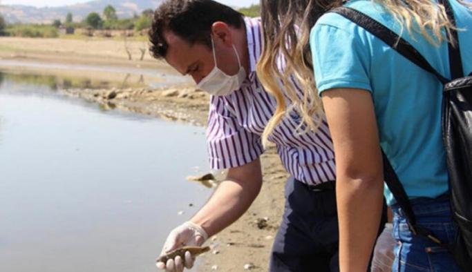 Binlerce balık oksijen kaybından telef oldu!