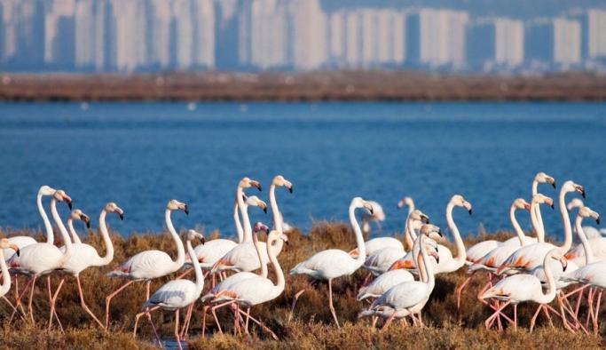Kuşlar için Doğaya Saygı Yürüyüşü