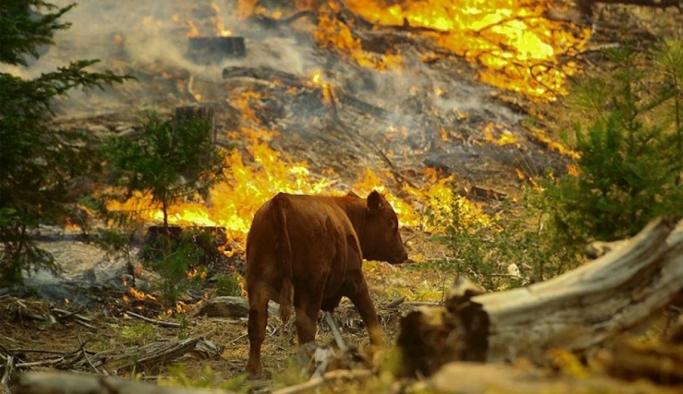 Orman Yangınları ve İklim Değişikliği