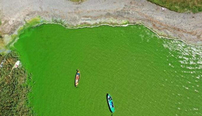 Uluabat Gölü yeşile boyadı