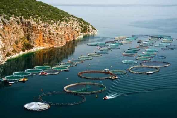 Balık çiftliklerinin kıyıdan ne kadar uzak olacağına karar verildi!