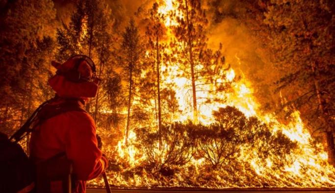 California'da olası yangınları önlemek için ilginç yöntem
