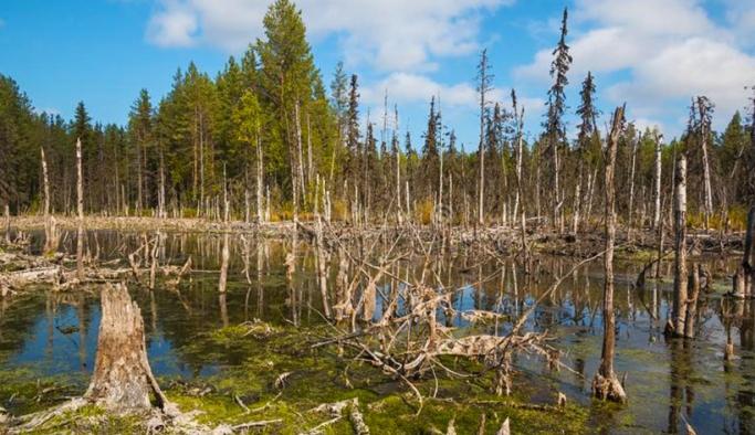 'Kuzey Kutbu'nda hava kirliliğinden ağaçlar fotosentez yapamıyor'
