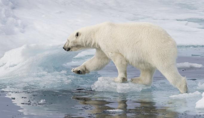 Avustralyalı sağlık kurumlarından iklim değişikliğiyle mücadele çağrısı