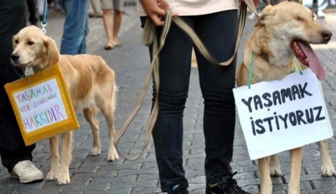 Hayvan hakları yasasında sona doğru! 2 yıl ceza geliyor