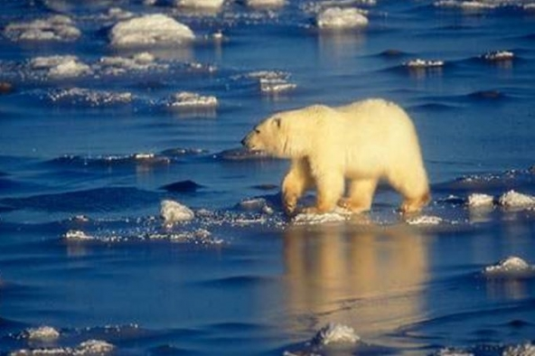 İklim değişikliğinin yol açtığı tehlikeler bitmiyor!