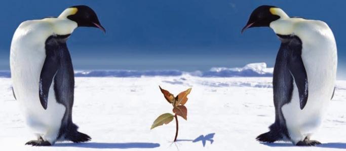 """Küresel Isınmayı önlemek için şaşırtıcı öneri: """"Gezegeni Soğutmak"""""""