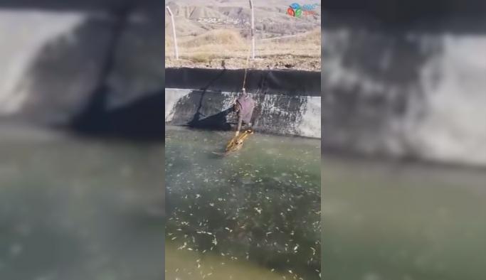 Ölmek üzere olan tilkiyi, kalp masajıyla hayata tutundurdu