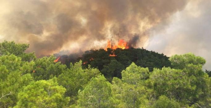 Orman yangınlarının faturası ağır oluyor!