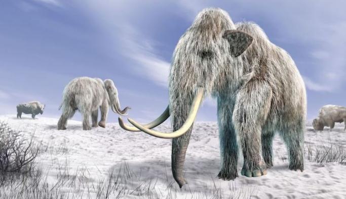 Son buzul çağında yaşayan memelilerin sonlarını getiren senaryo ne?