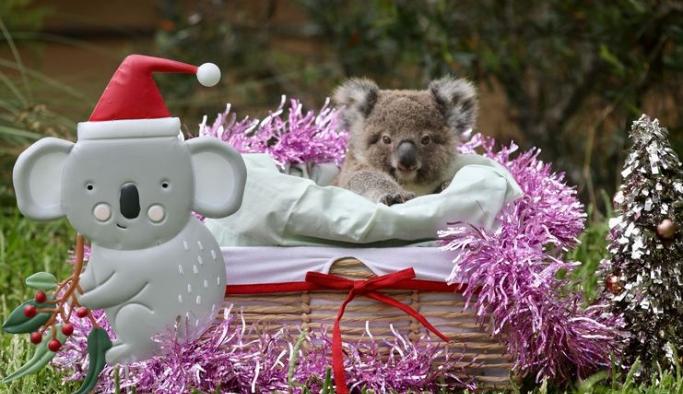 Avustralya'daki hayvanat bahçesine yılbaşı erken geldi