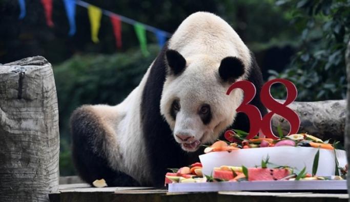 Dünyanın en yaşlı pandası Xin Xing hayatını kaybetti
