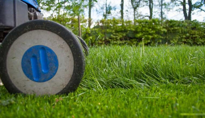 Antalya'da kuraklığa dayanıklı çim yetiştiriliyor