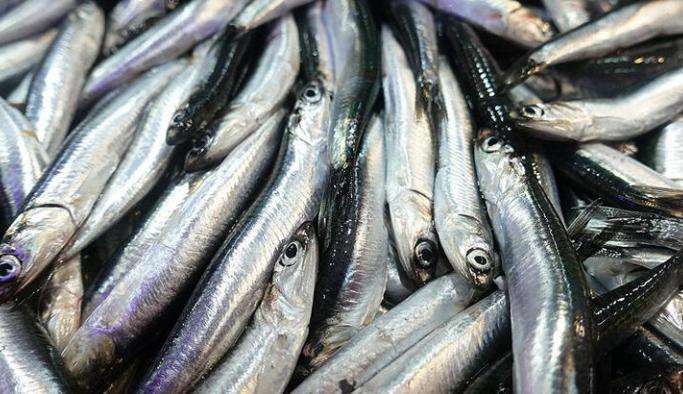 Balıkçılardan hamsinin nesli tükenmesin çağrısı
