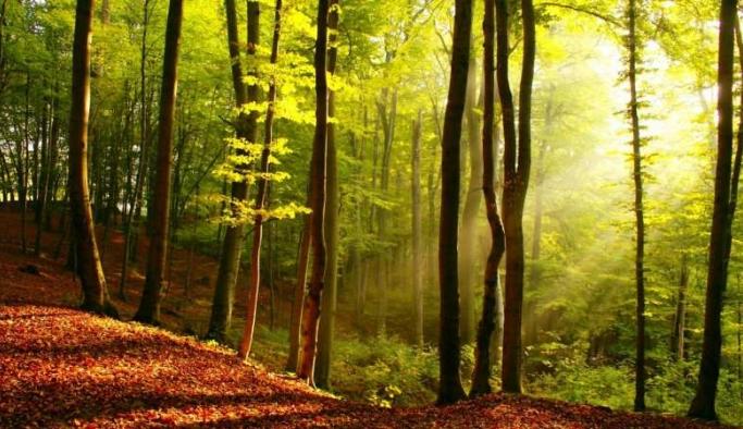 Ormanlar çöp sahasına dönüştü