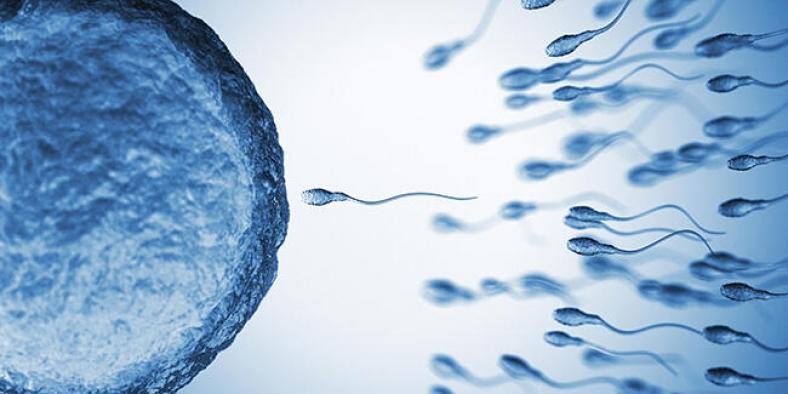 """2045 yılında sperm sayısı """"0"""" olabilir!"""