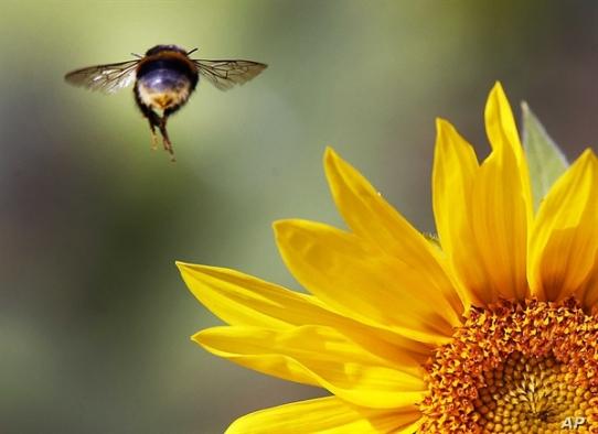 Almanya, ekolojik denge için böcekleri koruma yasası çıkarıyor