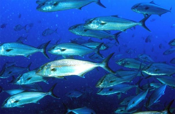 Denizlerde ölümcül tehlike: Su sıcaklığı 2020'de rekor kırdı