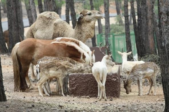 Türkiye'nin ilk ve tek safari parkı