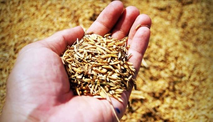 AtaTohum'da atalık tohum çeşidi 392'ye ulaştı