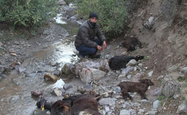 Ayvalık'ta demir madeni atıklarının meradaki keçileri zehirlediği iddiası