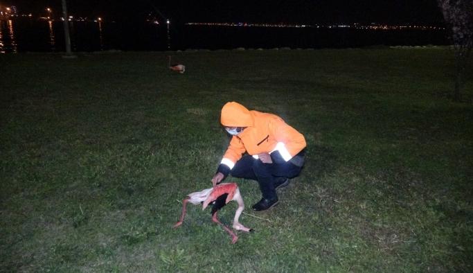 İzmir'de flamingo ölümlerinde ürperten ihtimal