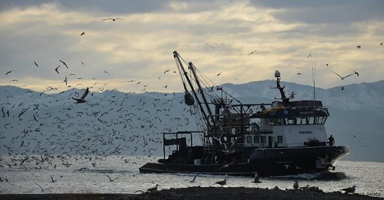 Karadeniz'de her yıl 1 milyon ton hamsi yok oluyor