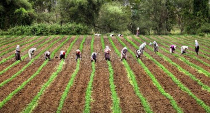 Tarım sektöründen yüksek büyüme rakamı