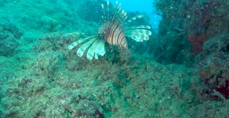Denizlerde istilacı tür tehlikesi: Balıkçılıkta verimi düşürecek