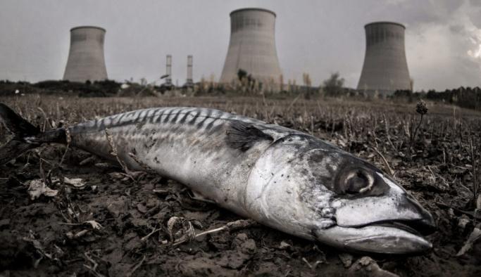 İklim değişikliği en büyük 6'ncı kitlesel yok oluşa aracılık edecek!