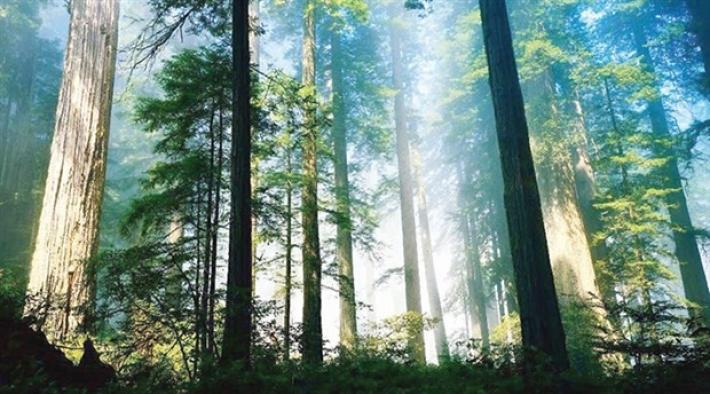 15 milyon yıl önce Çin'de tropikal orman varmış!