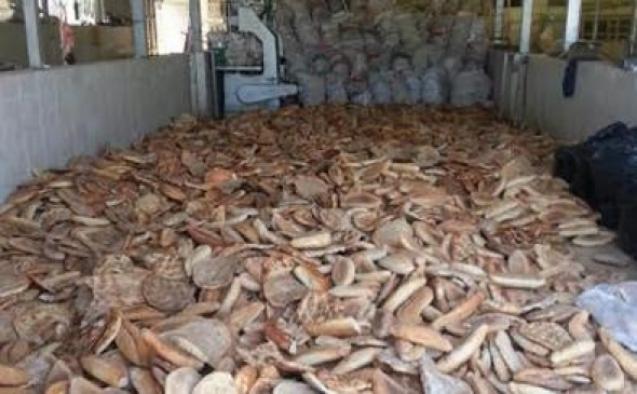 Alanya'da çöpe atılan ekmekler hayvanlara yem olacak