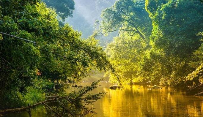 Amazon Ormanları Karbon Salımıyla Baş Edemiyor