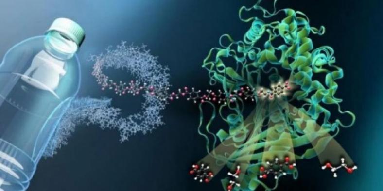 Araştırmacılar PET şişeleri yok eden bir bakteri buldu