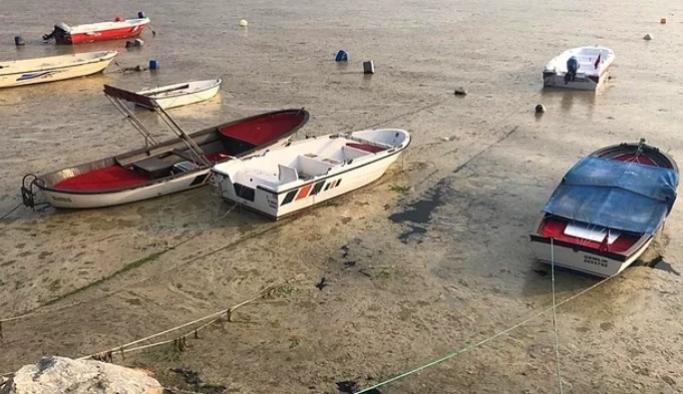 Bilim insanları 'Marmara'daki çevre felaketi'ni inceliyor