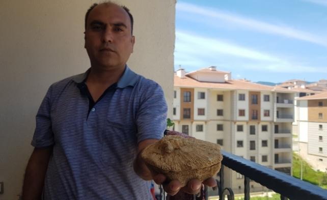 Doğa gezisinde bulduğu taş 45 milyon yıllık fosil çıktı