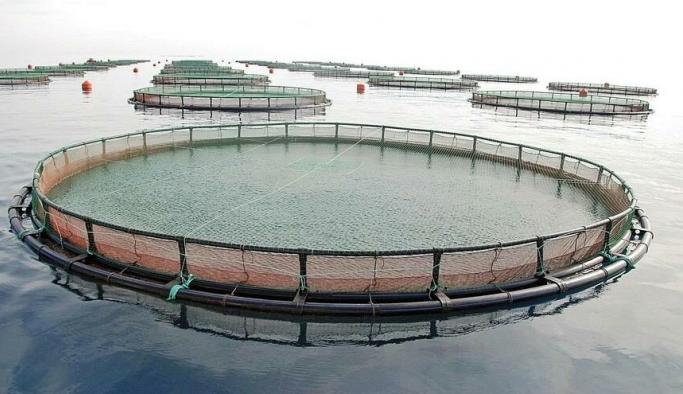 Kilometrelerce sahili kapatacak balık çiftliklerine Danıştay kararı