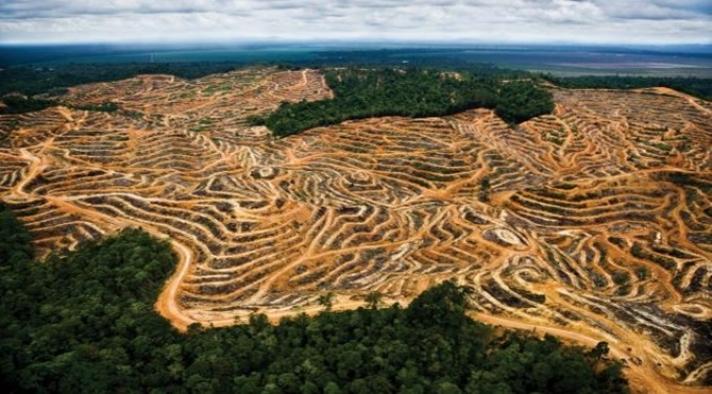 Yasa dışı ormansızlaştırma nedeniyle her yıl Danimarka büyüklüğünde yağmur ormanı yok oluyor