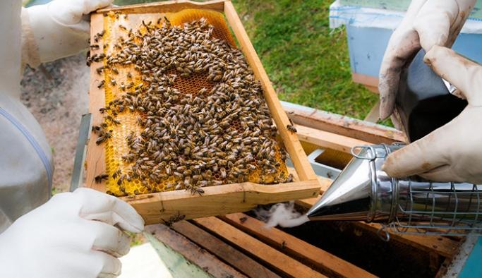 Yaşanan kuraklıktan arı varlığı ve bal üretimi de etkilenmeye başladı